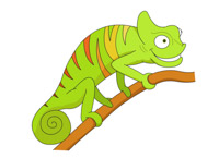 Cameleon clipart jackson Pictures Kb Graphics reptile tree