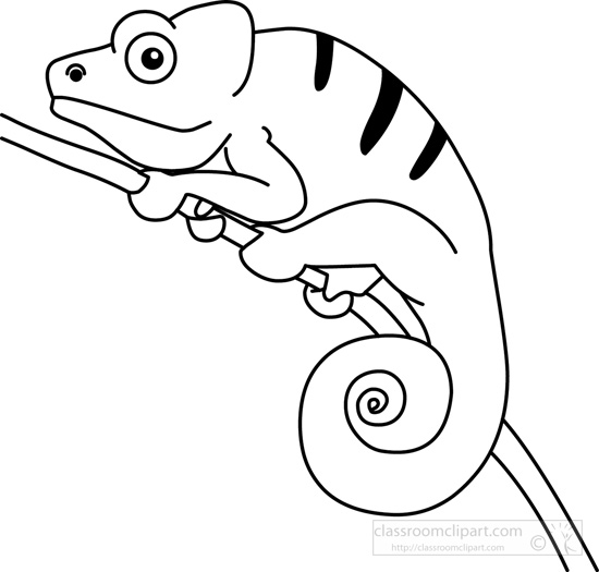 Drawn cameleon black and white And White white black And