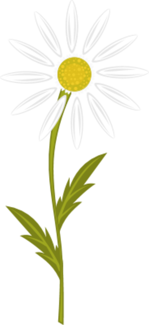 Chamomile clipart flower bunch Us chamomile this like you