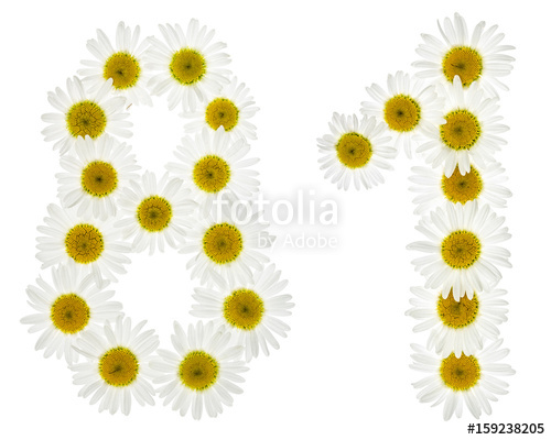 Chamomile clipart one White isolated eighty 81 from