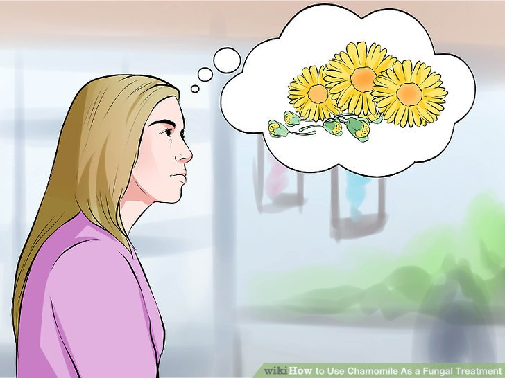 Chamomile clipart one As wikiHow 1 Fungal 3