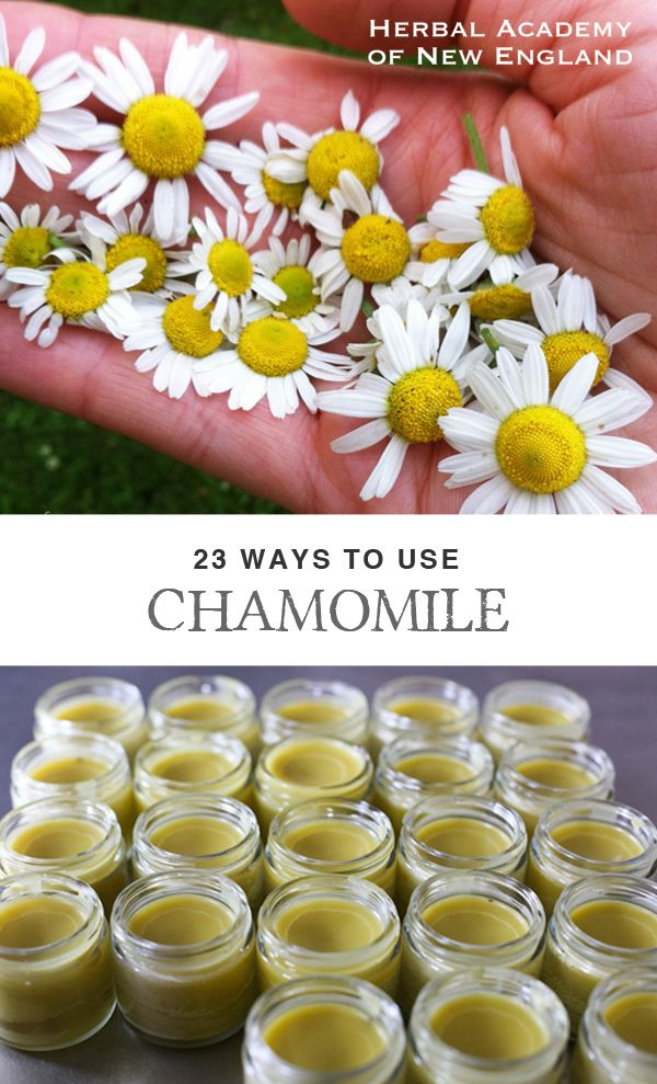 Chamomile clipart one Best ideas herbs on recognized