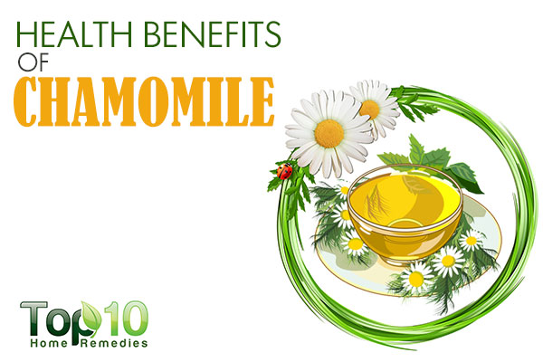 Chamomile clipart one Home Chamomile Remedies 10 of