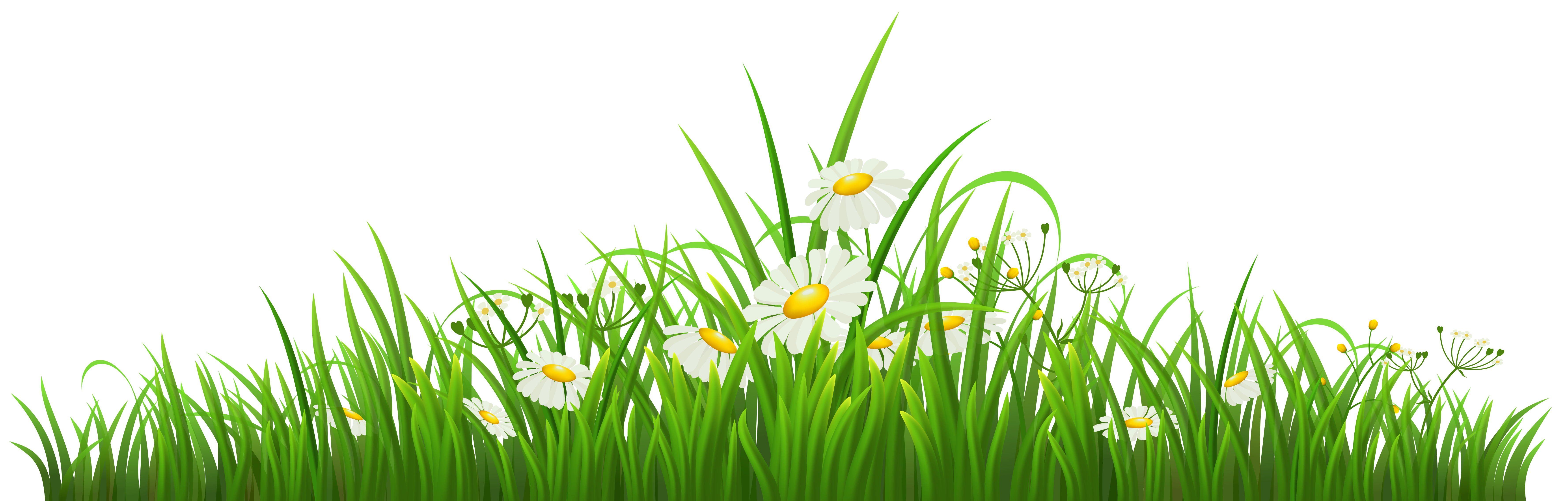 Camomile clipart png format Clipart with View  size