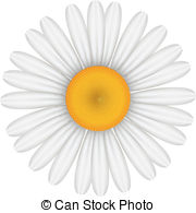 Chamomile clipart vector Chamomile of Clipart Chamomile Images