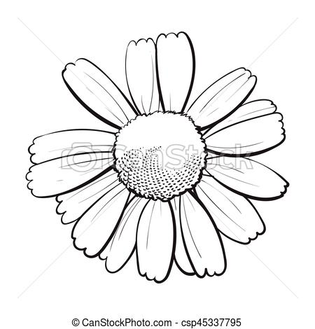 Chamomile clipart vector Top blossom blossom top style