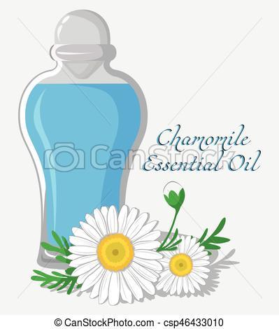 Chamomile clipart vector Csp46433010 Oil Art Bottle Chamomile