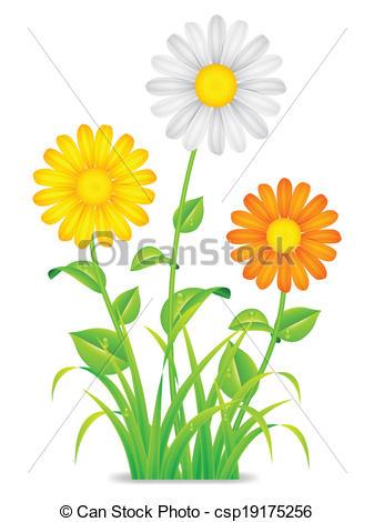 Chamomile clipart vector Csp19175256 flowers of chamomile chamomile