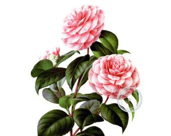 Chanel clipart camellia Camellia clip camellia Merritt Etsy