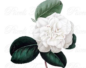 Chanel clipart camellia CAMELLIA Camellia wedding Download Etsy