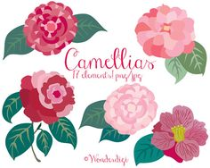 Chanel clipart camellia Flower icons illustration Clipart