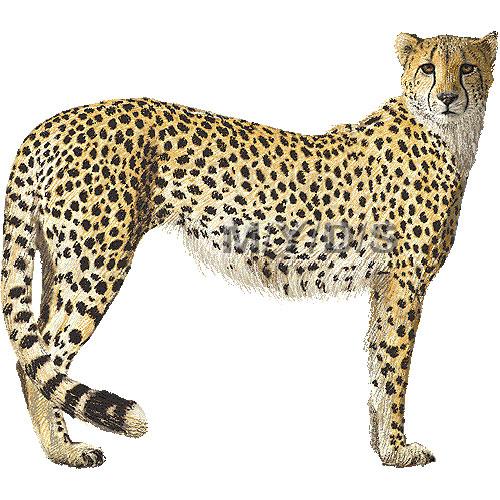 Cheetah clipart Images Free Clipart Clipart Cheetah