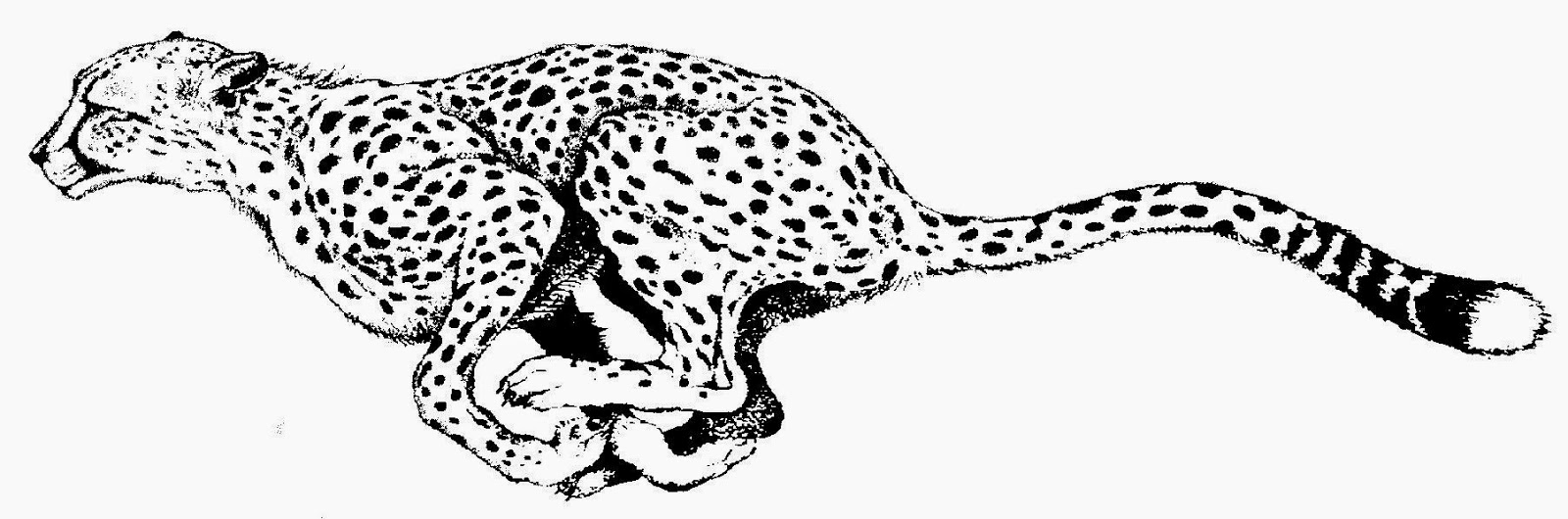 Cheetah clipart Cheetah clipart kid 2 black