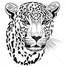 Animal clipart big 5 Image cheetah clipart for result