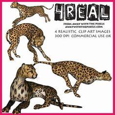 Bonobo clipart cheetah Realistic Clip Cheetah 4 Images