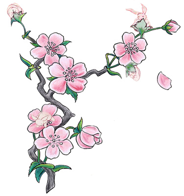 Drawn sakura blossom white background Pink Clipart Blossom  Free