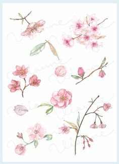 Buttercup clipart cherry blossom Blossom CLIP icon Set by