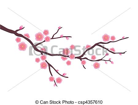 Drawn sakura blossom white background Vector of blossom blossom time