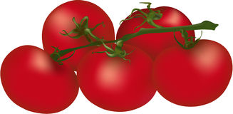 Cherry Tomato clipart bush Stock Illustrations Bush Tomatoes clipart