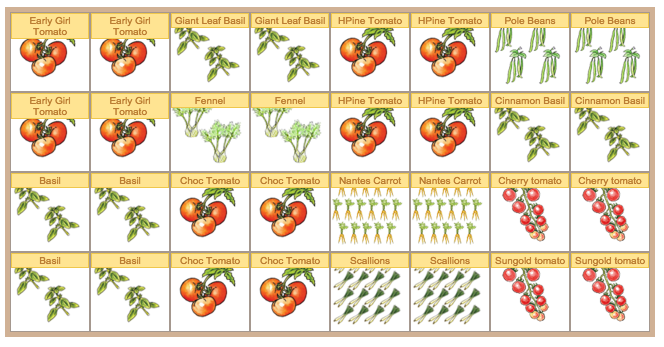 Cherry Tomato clipart carrot plant Sure and cage plenty leave