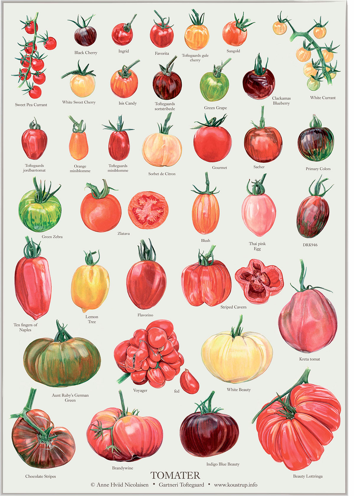 Cherry Tomato clipart different kind plant Different Rainbow well illustrations as