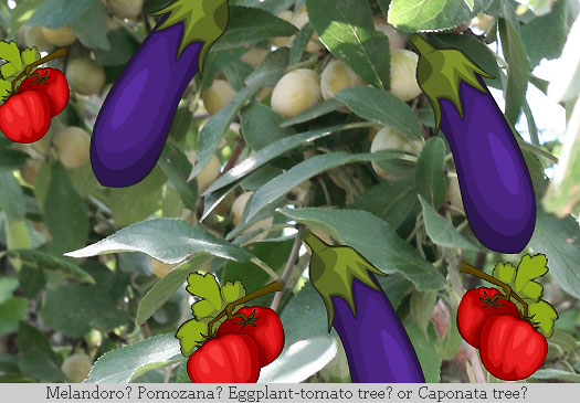 Eggplant clipart vector The tree tomato The Proud