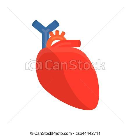 Cherry Tomato clipart human Vector cardiology  Vector Human