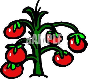 Cherry Tomato clipart tree cartoon Tomato Vine Art com Plant