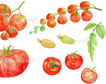 Cherry Tomato clipart vegetable plant Tomato Etsy digital yellow instant