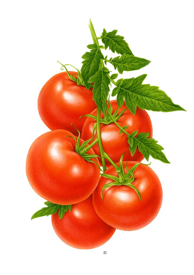 Cherry Tomato clipart vegetable plant Photos on 263 Vegetable Vegetable