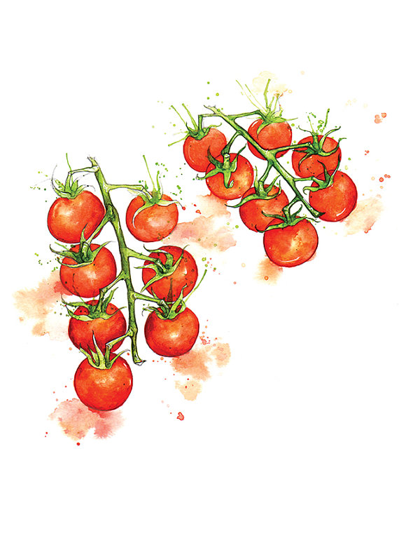 Cherry Tomato clipart veggie patch Art Fine  Painting Watercolour