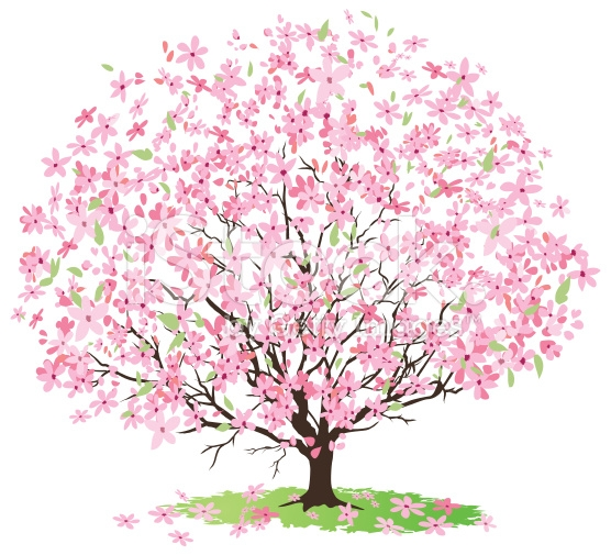 Cherry Tree clipart blossem Cherry collection tree image Clipart