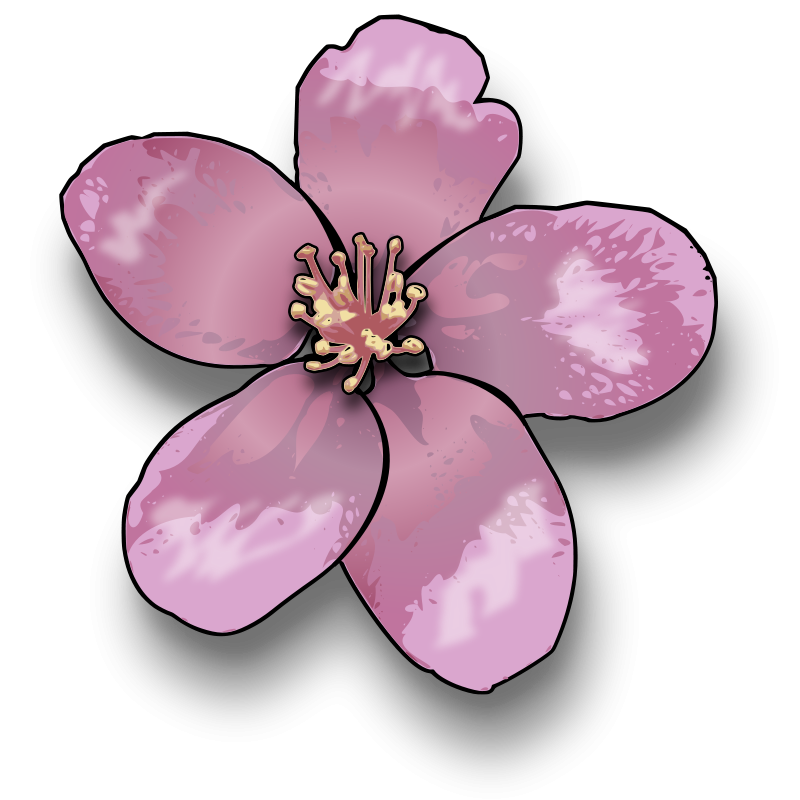 Cherry Tree clipart apple blossom Blossoms Cherry Drawing Cherry 4