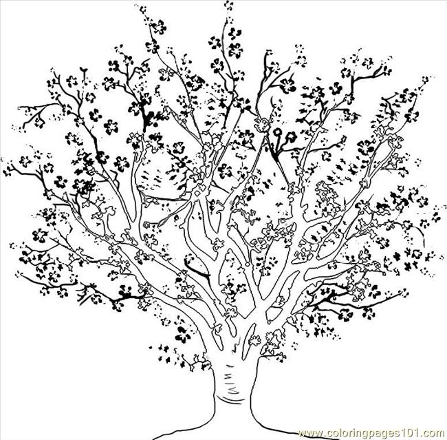 Cherry Tree clipart black and white Coloring coloring To Coloring Cherry