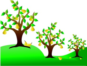 Cherry Tree clipart fruit orchard In Trees Image Image: Pear