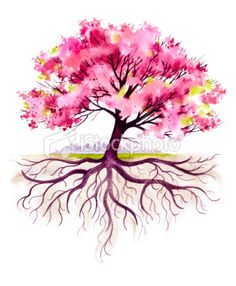 Cherry Tree clipart watercolor Pink tattoo roots with beautiful