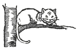 Cheshire Cat clipart the tree Cheshire branch images image domain