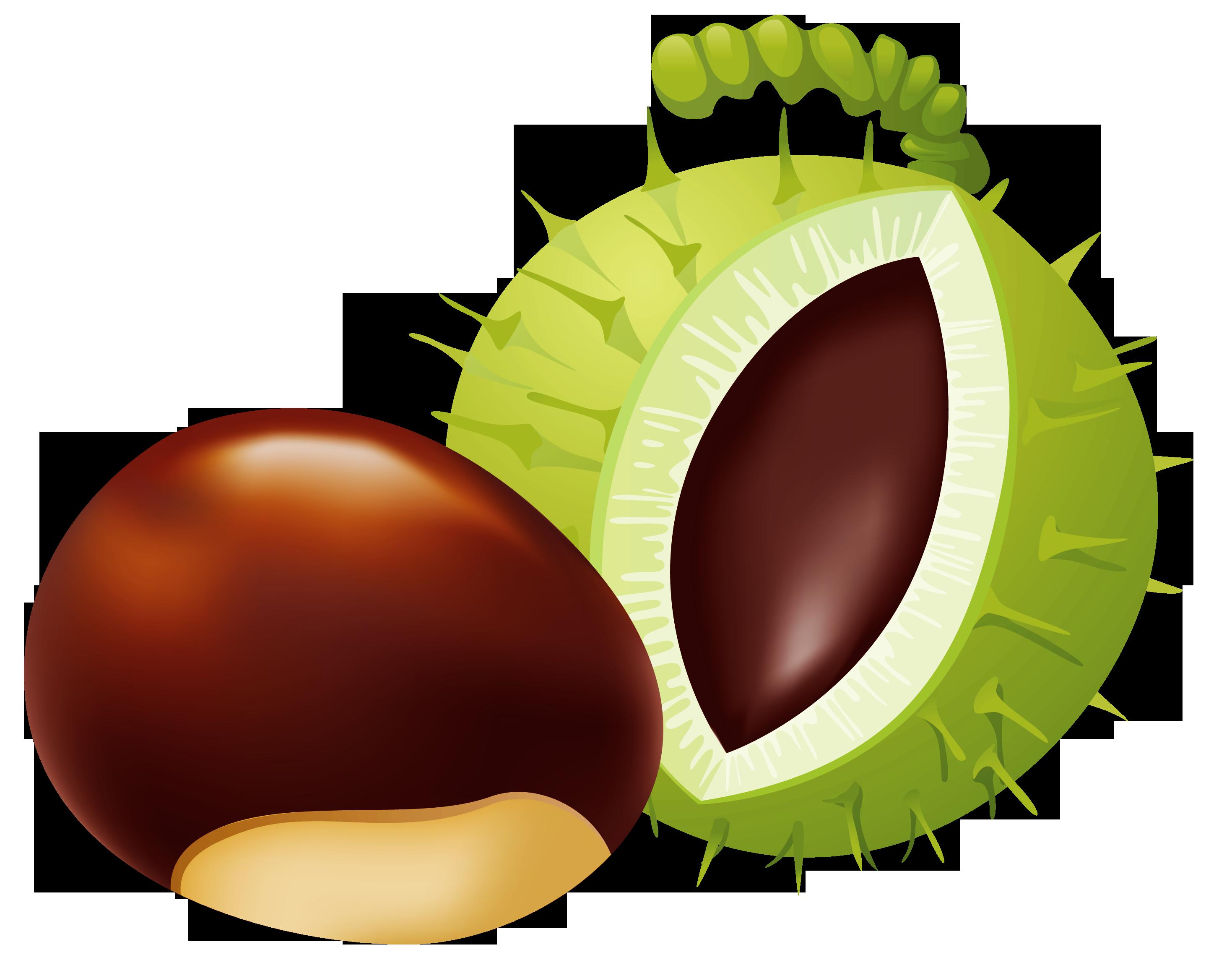 Chestnut clipart Best Chestnut Clip Chestnut PNG