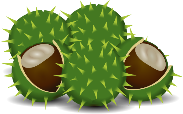 Chestnut clipart Clip as: at  online