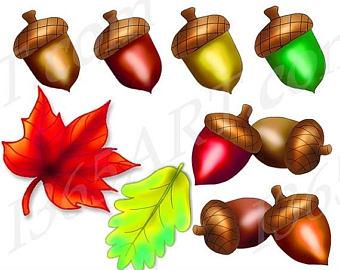 Chestnut clipart acorn Graphics Studio Set Download Acorn