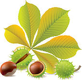 Chestunt clipart cartoon Chestnuts Chestnut chestnuts Clip ·