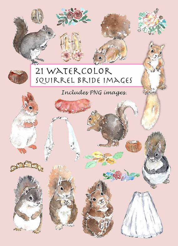 Chestnut clipart cute Squirrel Set from Watercolor Animals