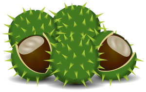 Chestunt clipart nuts Chestnuts  clipart png html