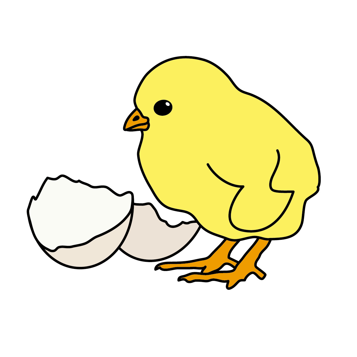 Chick clipart #4