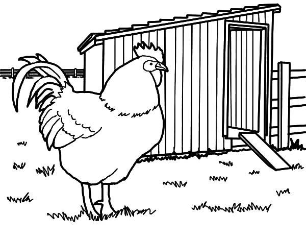 Chick clipart chicken house Chicken Coop Coop Coloring Chicken