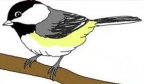 Capped clipart Free Chickadee Clipart Chickadee