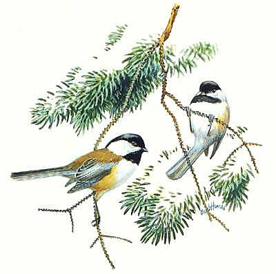 Chickadee clipart Png jpg best images clip
