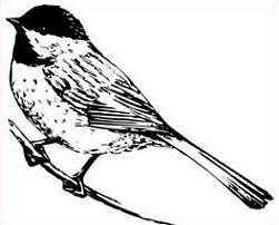 Chickadee clipart Free Chickadee Clipart Chickadee