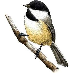 Chickadee clipart Art capped Clip Art capped