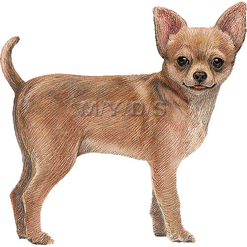 Small clipart chiwawa Savoronmorehead Clipart Savoronmorehead Clipart Chihuahua